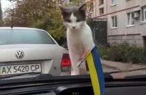 バックジャンプする猫