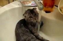 水浴びを楽しむ猫