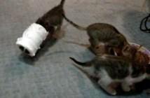 トイレットペーパーが取れなくなった子猫