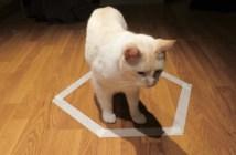 猫転送装置に捕まった猫