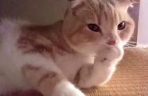 チュパチュパする猫