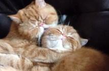 愛が止まらない猫