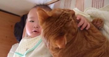 赤ちゃんから離れない猫