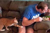 飼い主さんのごはんを食べたい猫