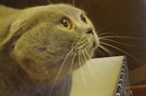 頭の上に本を乗せると威嚇する猫