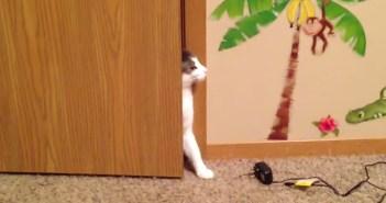 コッソリと入ってくる猫