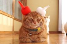 宇宙と交信する猫