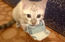 お札をくわえた子猫