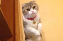 可愛い仕草でおねだりする猫