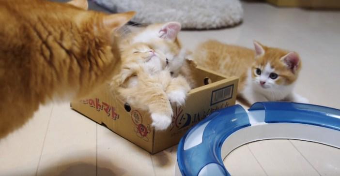 母猫が駆けつける