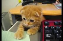 仕事の指示を出す子猫