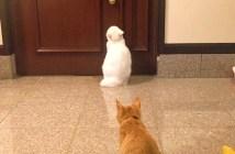 スキを見せた兄猫に突撃する子猫