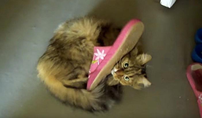 スリッパで遊ぶ猫