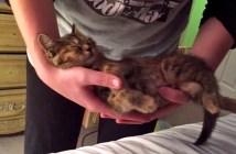 ゆりかごに揺られる子猫