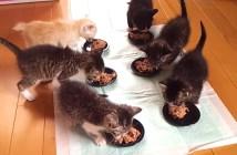 食事が待ちきれない子猫