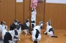 暇を持て余した猫の遊び