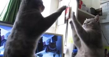 鏡のような猫