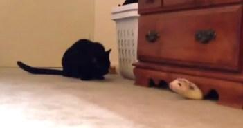かくれんぼ遊びをする猫とフェレット