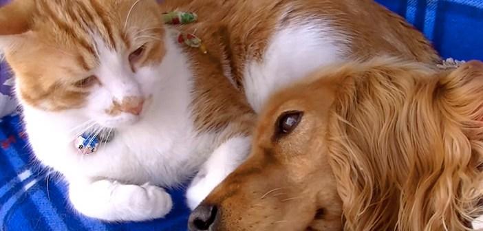 犬を看病する猫
