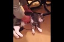 kyohi_cat