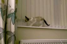 子猫のマジック