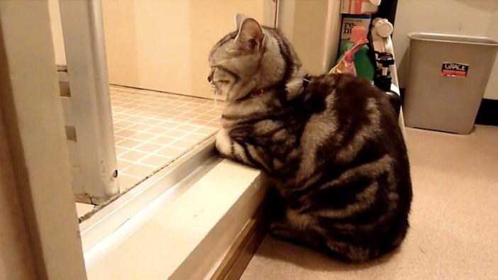 お風呂から上がってくるのを待つ猫