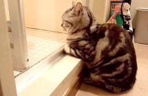 お風呂から上がるのを待つ猫