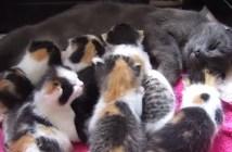8匹の子猫を産んだ母猫