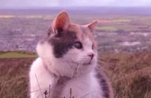 盲目の猫スティービー