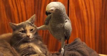 猫の頭に足を乗せるオウム