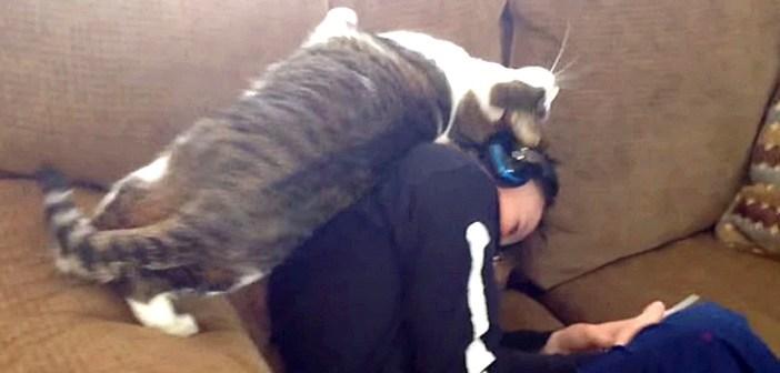 男の子にスリスリする猫