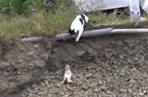 急斜面から転がり落ちた子猫を助ける母猫