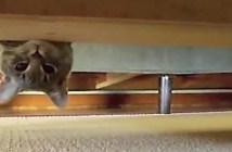 身近に潜むスパイ猫