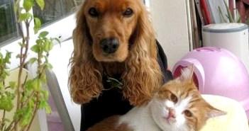 犬が好きで押し掛けてきた猫
