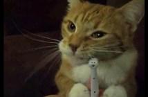 歯磨きが大好きな猫