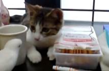 インコを観察する子猫