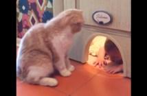 猫以外通り抜け禁止