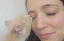 まぶたをチュパチュパする子猫
