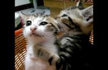 兄弟猫が大好きな子猫
