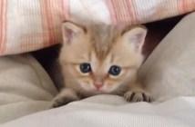 爪が服にひっかかっちゃった子猫
