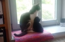 窓辺で寄り添う猫と子猫
