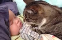 赤ちゃんの顔を見つめる猫