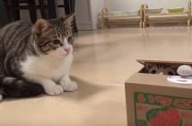 猫貯金箱の猫とお友達になりたい猫