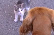 犬は怖くないと子猫に教える母猫