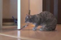 お風呂の前でオロオロする猫