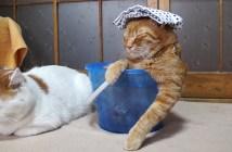 バケツ風呂に入る猫