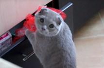 いたずらがバレた猫