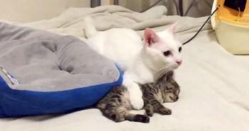 地震から子猫を守る猫