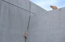壁を登る猫