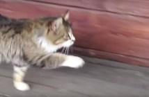 コミカルな動きの猫